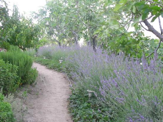 Nisanyan Evleri Hotel: Lavander-lined path to our cottage