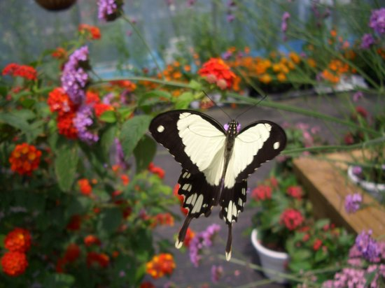 Tiverton, RI: Butterfly