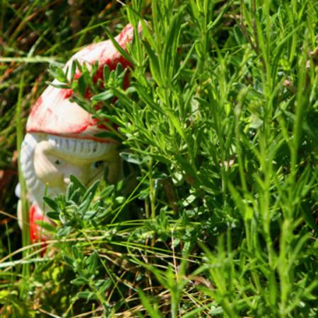 Swantown Inn & Spa: the first garden gnome we've come across for our project