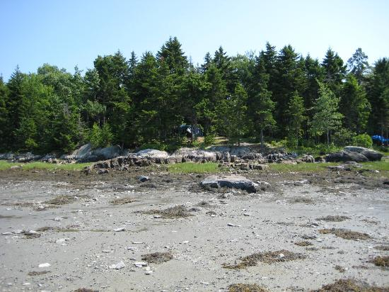 Mt Desert Narrows Camping Resort: Site from water at low tide