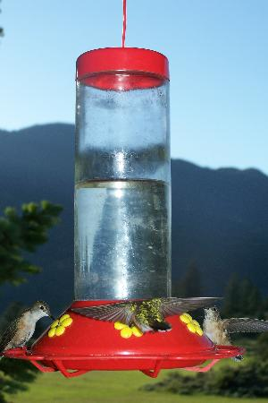 Sagewood Cabins: Hummingbirds