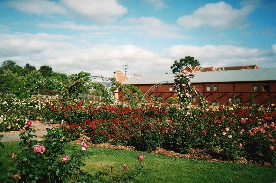 Rose garden adelaide botanic gardens picture of for Adelaide gardens