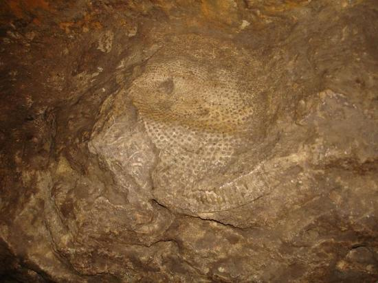 Harmony, Миннесота: Prehistoric Fossil in the Wall