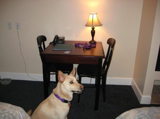 Blue Sands Motel: Desk (and my dog)