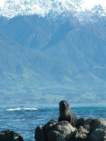 Kaikoura, Nouvelle-Zélande : Nice Place to call Home