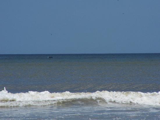 Seahorse Oceanfront Inn: The ocean