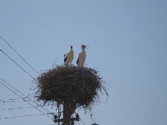 Şahin Villa Aparts: Baby Storks!