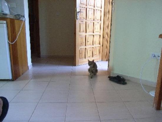 Sahin, Apartments : Cat in Apartment!