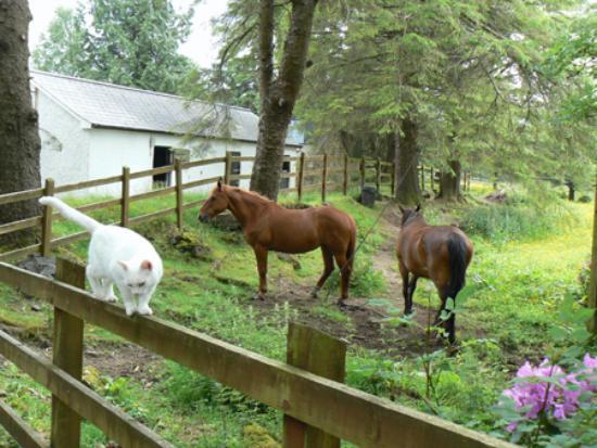 Rhu-Gorse: cat & horses, Rhu Gorse