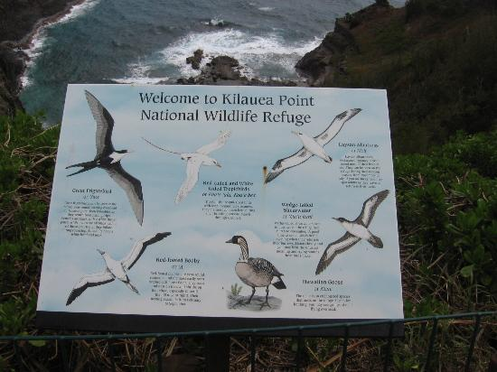 Kilauea Point National Wildlife Refuge: Bird Species at Kilauea Point