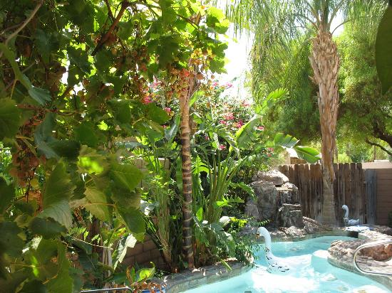 Sundance Villas: The pool, waterfall, and lush landscaping