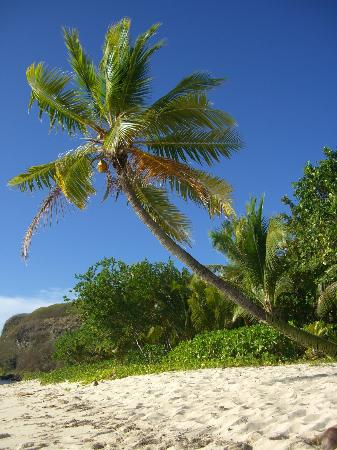 Tokoriki Island Resort: The beach and the coconut palm