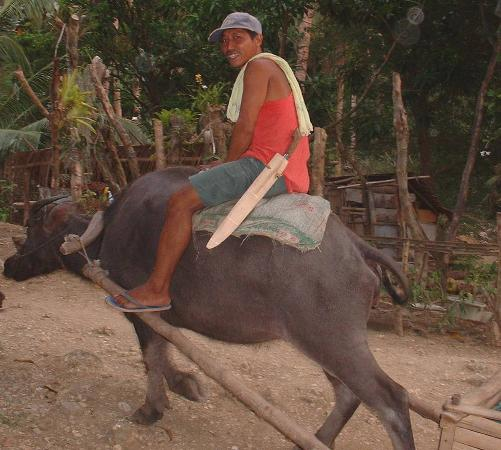 burias island philippines riding the caribou