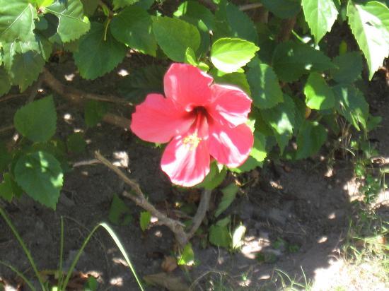 La Belle Fleur Foto Van Iberostar Playa Alameda Varadero
