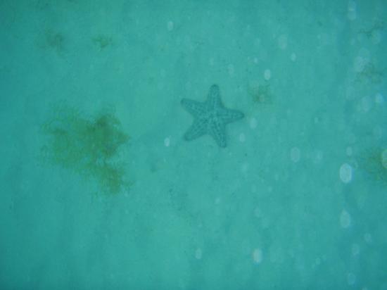 Bucuti & Tara Beach Resort Aruba: Snorkeling in front of Bucuti