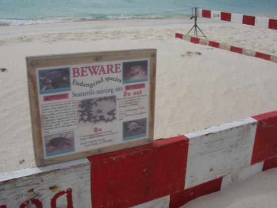 Bucuti & Tara Beach Resort Aruba: Protected Turtle Nest