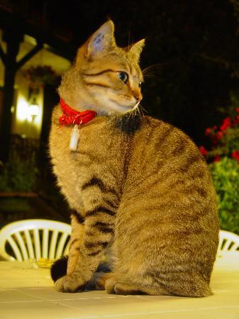Hotel Saint Charles: Cat