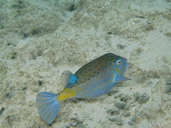 Sunset Resort : Box Fish
