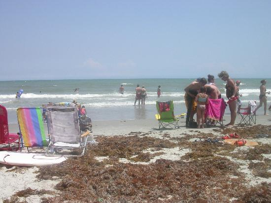 last day on beach sea weed all over picture of