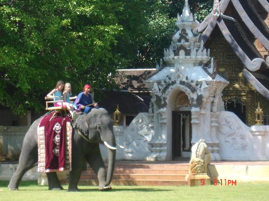 The Dhara Dhevi Chiang Mai: Our girls riding the elephant at the hotel