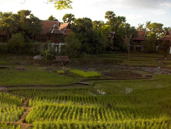 The Dhara Dhevi Chiang Mai: The rice fields outside our Villa