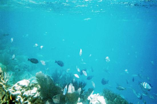 Paradise Island & The Mangroves (Cayo Arena): Fish