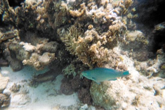 Paradise Island & The Mangroves (Cayo Arena) : more fish