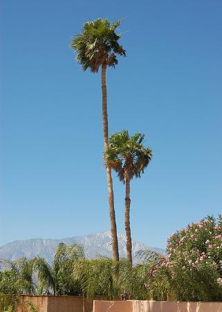 Desert Hot Springs, CA: The beautiful sky and view of the mountains
