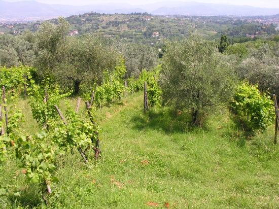 Fattoria Il Milione: Another view from our cottage