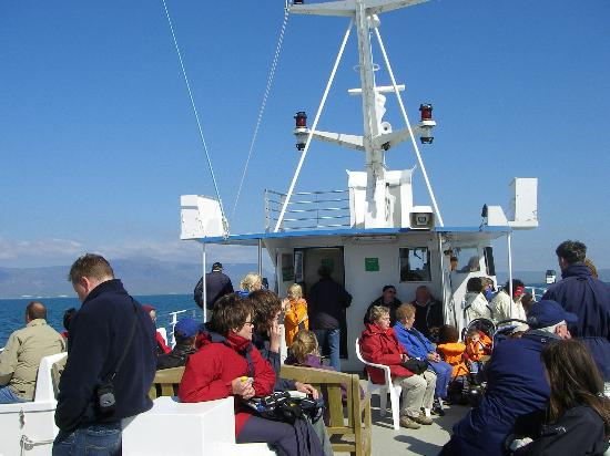 BB 44 Guesthouse: Whalewatching