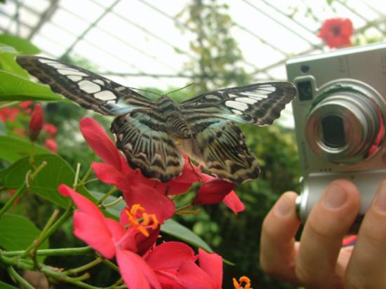 Tropical World : Butterfly