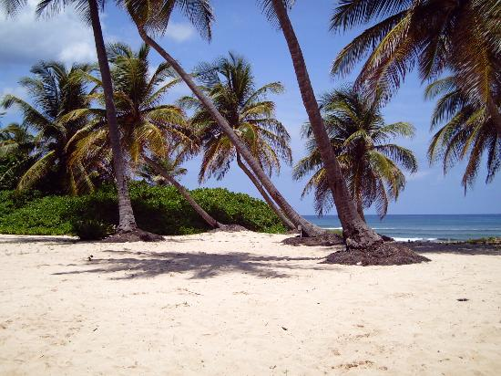 Sainte-Croix : Hibiscus Beach Resort