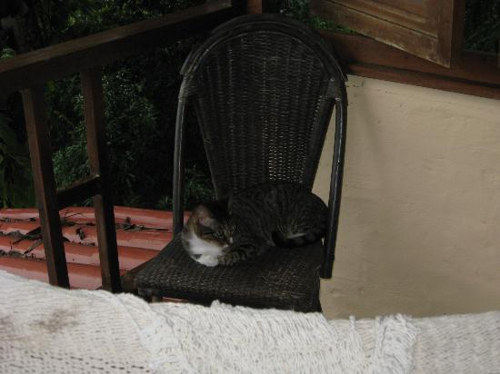Villas Nicolas: One of the hotel cats that visited our room