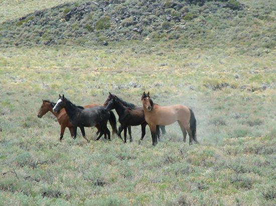 Rock Creek Pack Station: Band of Pizona mustangs