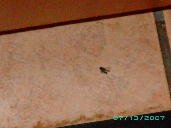 Ramada by Wyndham SeaTac Airport: dead flies on the floor one of many and dirty floors..sick