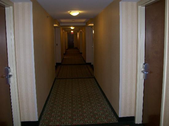 Hilton Garden Inn Athens Downtown: Hallway