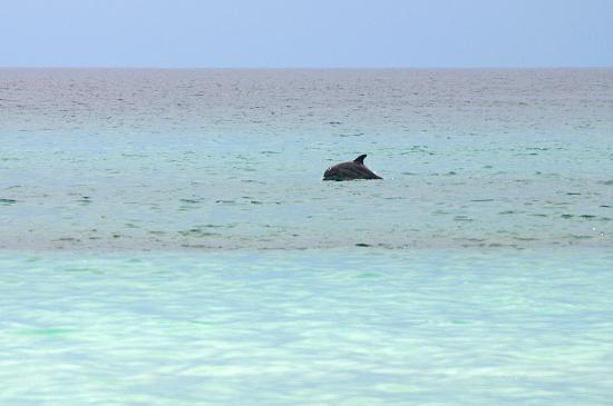 Santa Rosa Beach, Floride : Dolpin