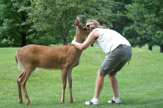 Brass Ring Golf Club : The Brass Ring's tame deer