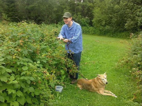 Ferme Mario Gadbois: Picking raspberries