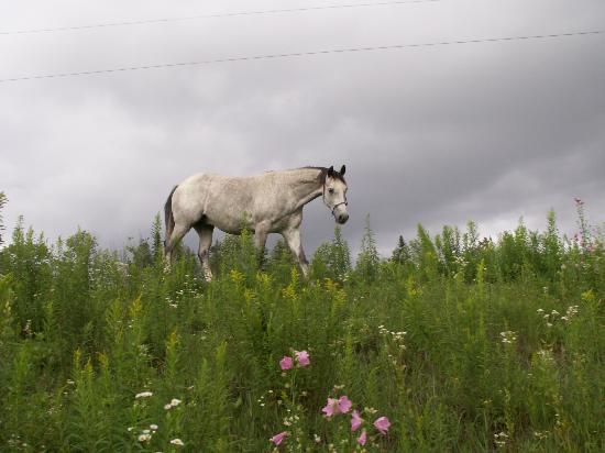 LaCross Farm Cottages: Heather the horse