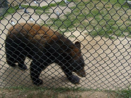 Cape May Court House, NJ: Black Bear
