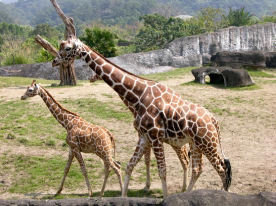 how to go to taipei zoo