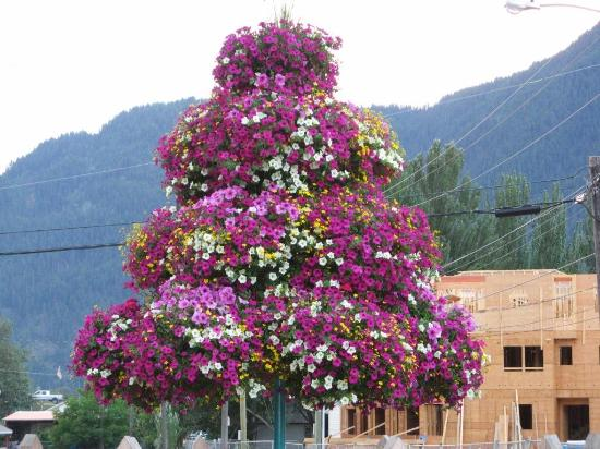 Sundog Bed & Breakfast: Flower Tree Downtown Sicamous