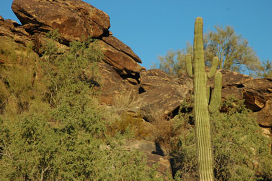 Phoenix, AZ: South Mountain Park 1