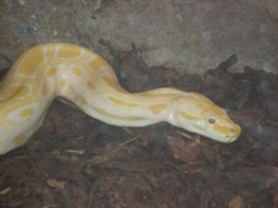 San Diego, CA: Burmese Python (Reptile House)