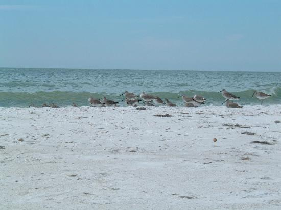 Dunedin, FL: birds on beach