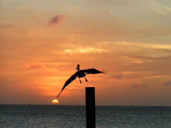 Aruba Surfside Marina : Aruba Sunset at Pinchos