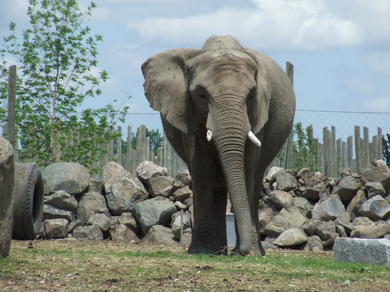 Granby Zoo (Zoo de Granby): Elephants at the zoo