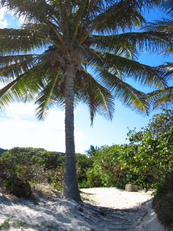 Flamenco Beach: Tree