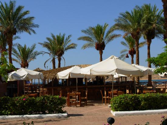 Iberotel Palace: ...